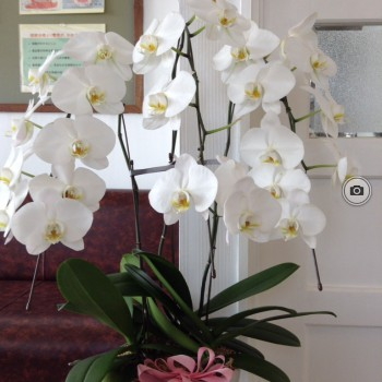 待合室のお花がきれいに咲いています